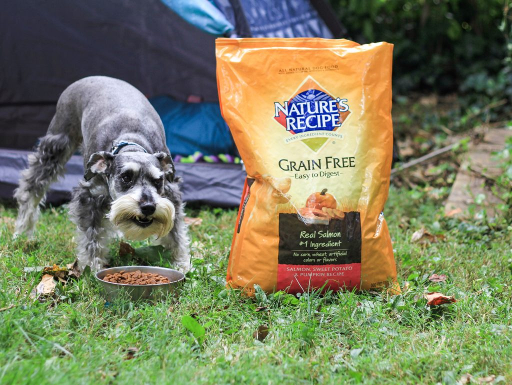 camping with dogs mommy blogger dad blog traveling family camping family wellness 2017 2018 dog food homeschooling family travel United States fall camping in fall packing list for dogs mommy blogger daddy blogger