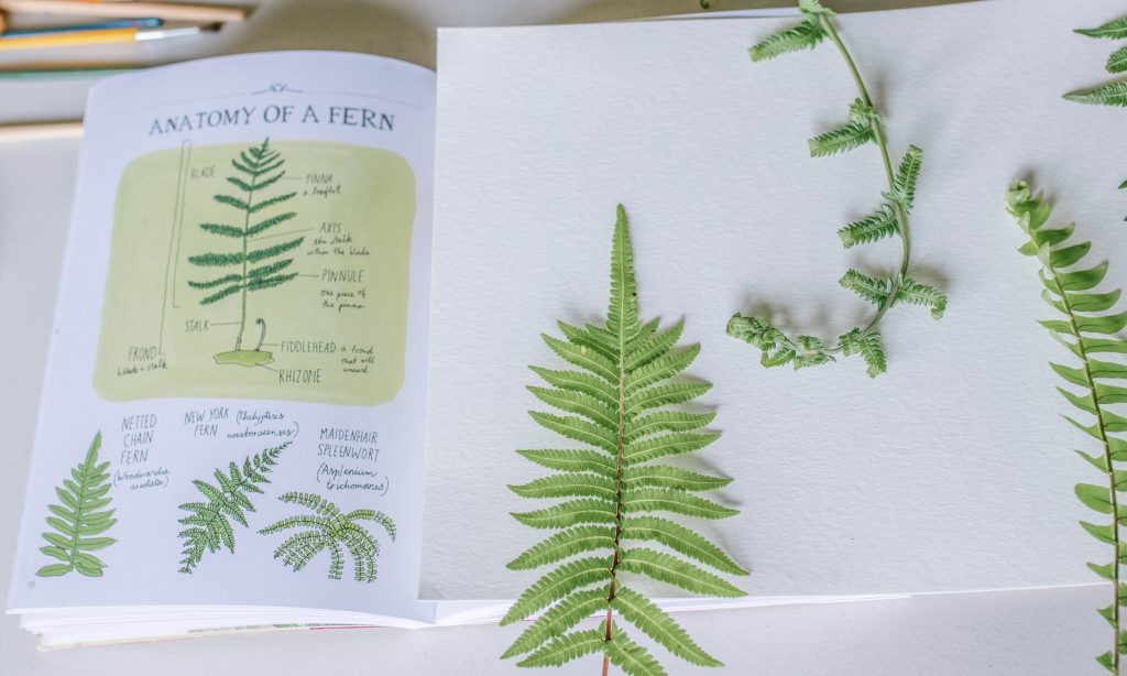 art and nature mom blogger mommy blogger mom blog influencer ferns homeschooling early education nature school