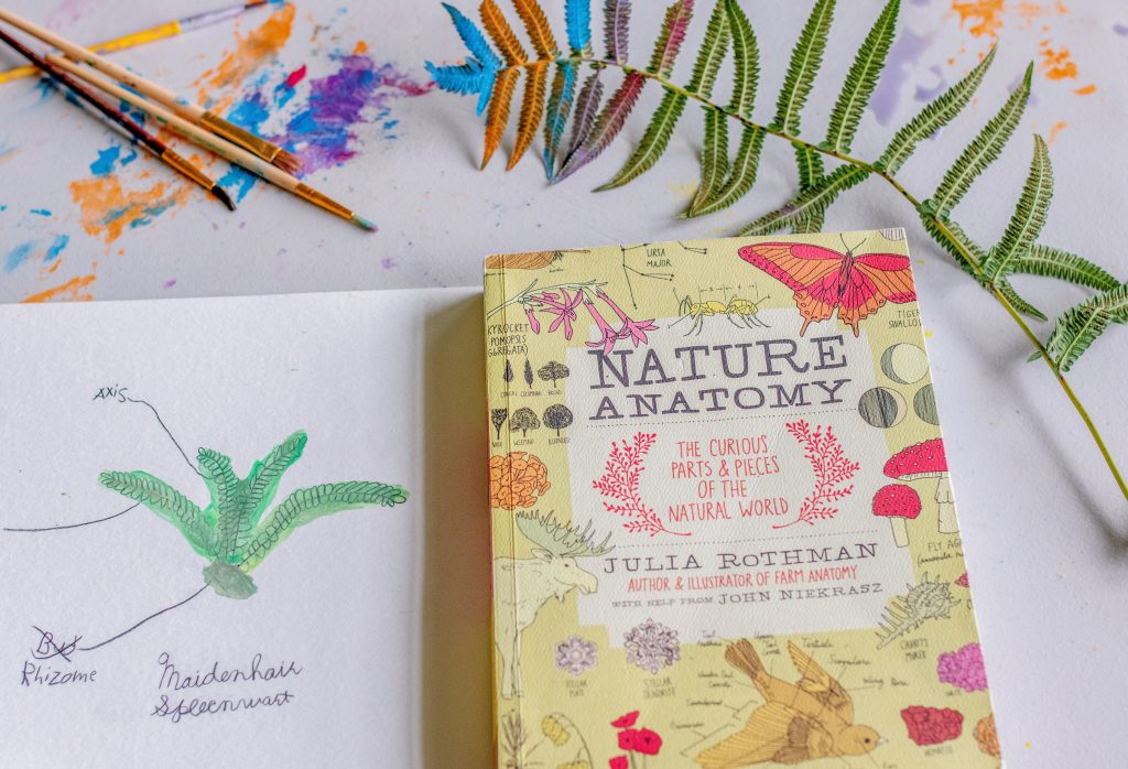 nature school learning from nature mom blogger mommy blogger influencer Virginia Massachusetts wildschooling homeschooling worldschooling Latina blogger hispanic influencer