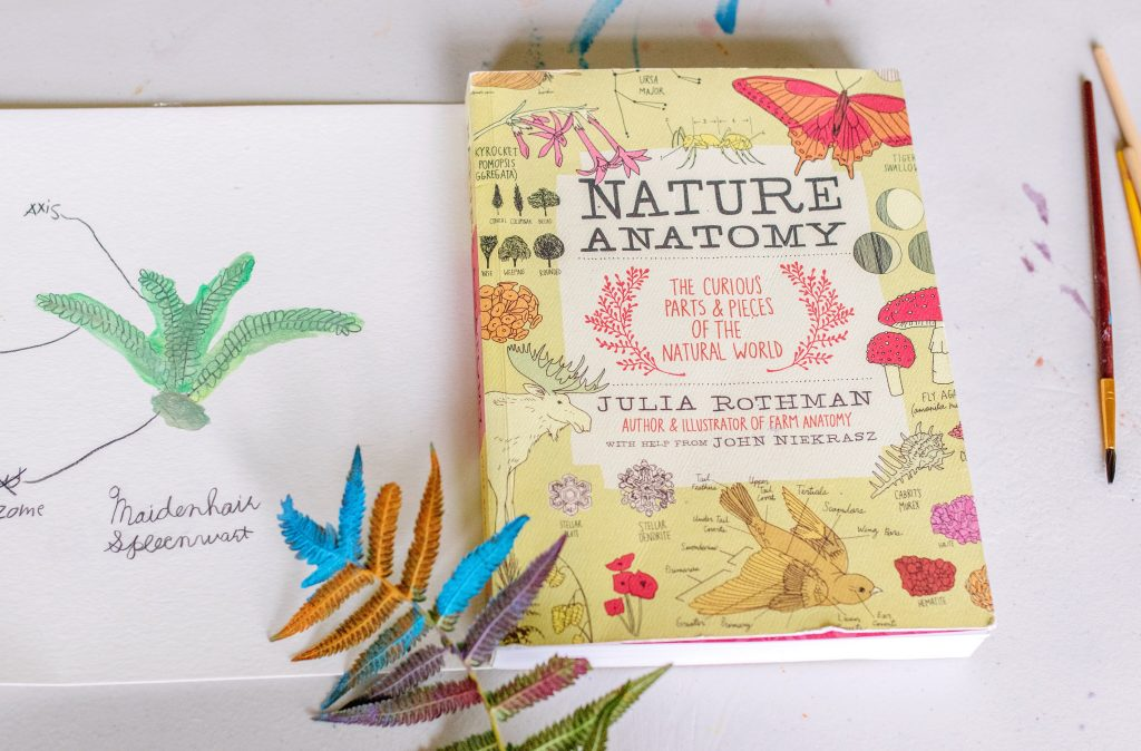 nature anatomy art and nature study of ferns mom blogger homeschooling influencer Virginia