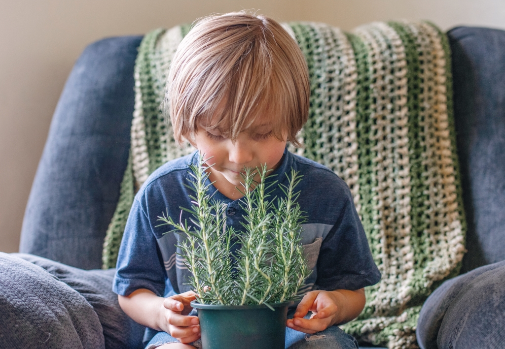small child holding a rosemary plant and smelling it with a smile.